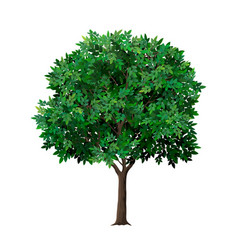 Realistic tree with green leaves vector