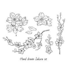 Sakura flowers blossom set hand drawn line ink vector
