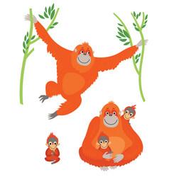 family orangutans vector image