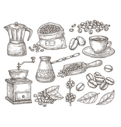 hand drawn natural coffee graphics beans sketch vector image