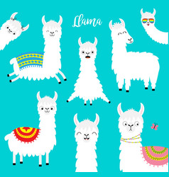 Llama alpaca set face glassess childish baby vector