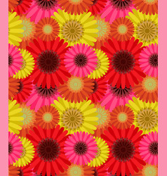 seamless pattern colorful gerbera flowers vector image