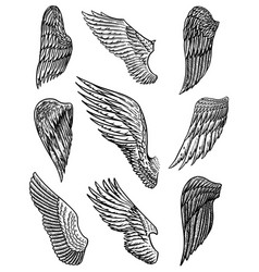 Set angel wings in vintage style template vector