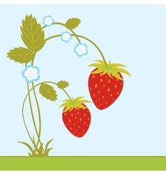 Strawberries with blossom vector image