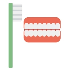Dental jaw model and toothbrush vector