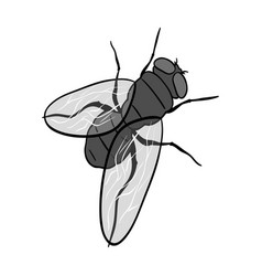 Dipterous insect flydipterous insect fly single vector