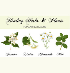 healing plants set vector image