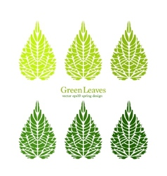 Isolated green leaves minimalistic vector