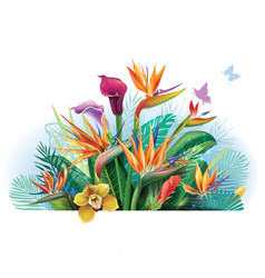 arrangement with strelitzia flowers vector image