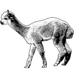 Alpaca sketch vector