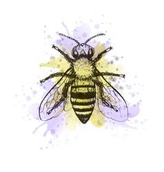 Bee vintage watercolor image vector