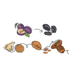 Dried fruits minimalist vector