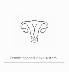 female reproductive system icon isolated vector image
