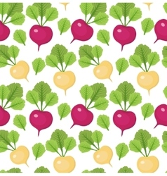 Radish seamless pattern Red and white radishes vector