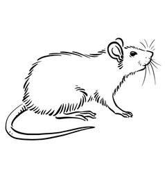 Rat sketch image vector