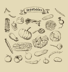 Set of hand-painted vegetables vector