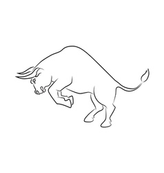 Angry bull attack vector image