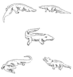 Crocodiles Sketch pencil Drawing by hand vector image