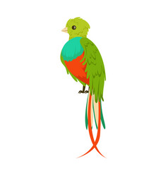 bright colorful bird with a long tail colorful vector image