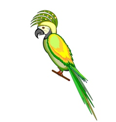 A parrot macaw isolated on a white background vector image