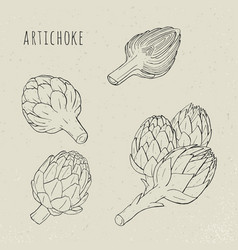 Artichoke set hand drawn botanical plant vector