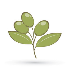 olive graphic vector image
