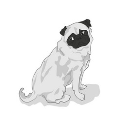pug sitting color vector image