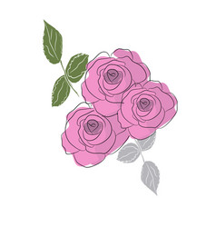 roses are blooming vector image