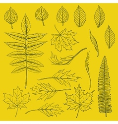 Set of autumn leaves drawn in thin lines vector
