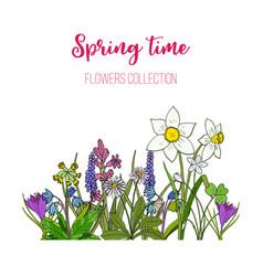 Spring flowers crocus scilla primula vector