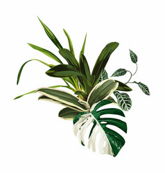 tropical palm leaves jungle leaf orchid plant vector image