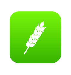 dried wheat ear icon digital green vector image