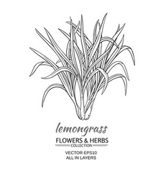 lemongrass vector image