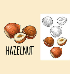 set whole and half hazelnut with green leaves vector image
