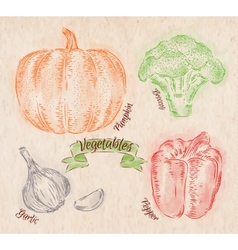 Vegetables pepper pumpkin garlic broccoli country vector image