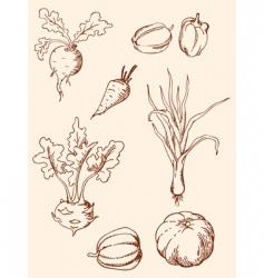 hand drawn vintage vegetables vector image vector image