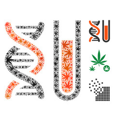 Genetic analysis composition of cannabis vector