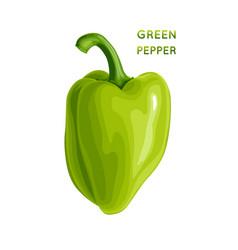 green pepper vector image