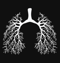 Human lungs respiratory system healthy lungs vector