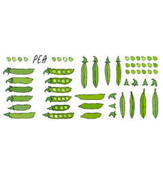 peeled green pea pod big set healthy bio vector image