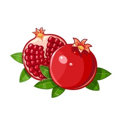 Couple juicy ripe pomegranate vector image vector image