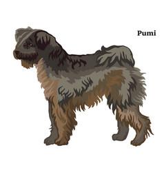 colored decorative standing portrait pumi dog vector image