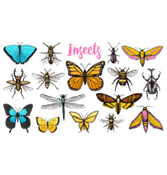Different insects set butterfly and dragonfly vector