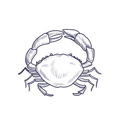 drawing crab vector image