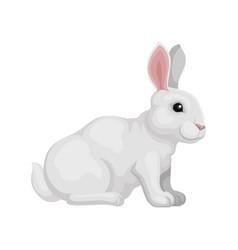 lovely rabbit sitting isolated on white background vector image