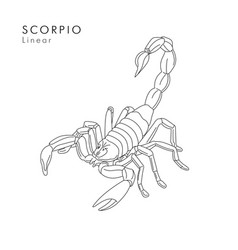 Scorpion linear or tattoo sketch hand vector