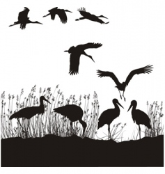 Storks in peat vector