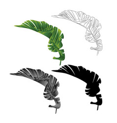banana leaf first natural outline and silhouette vector image