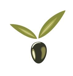 black olive logo vector image