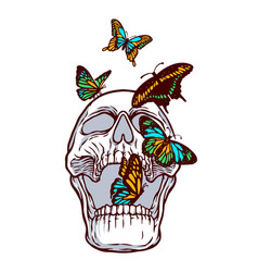 colorful butterflies and skulls vector image